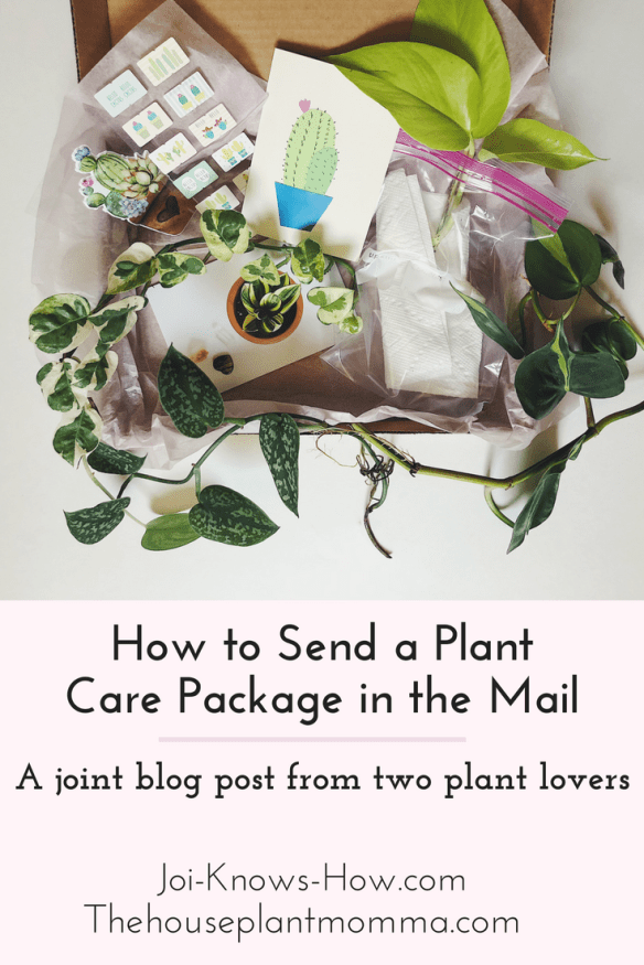 How to Send a Plant Care Package in the Mail