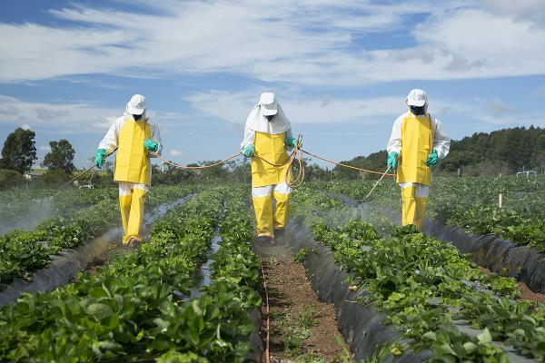 Baking soda can successfully eliminate 'up to 96% of pesticides' from vegetables and fruits