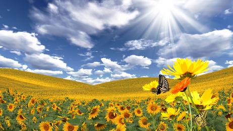 https://i1.wp.com/joieetabondance.com/wp-content/uploads/2014/06/Papillon-soleil-fleurs-changer-de-vie-abondance-joie-nature-bonheur.jpg
