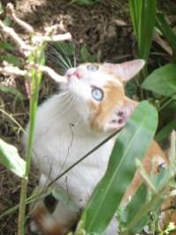 Plantation cat