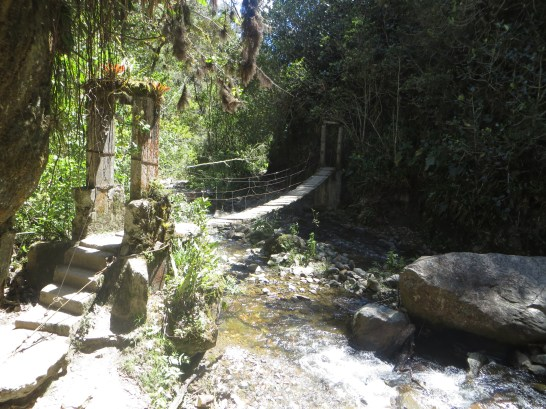 Overgrown jungle bridge