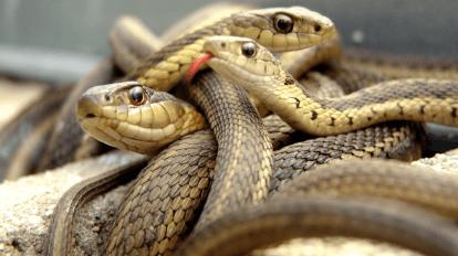 ТОП 10 необычных и удивительных змей