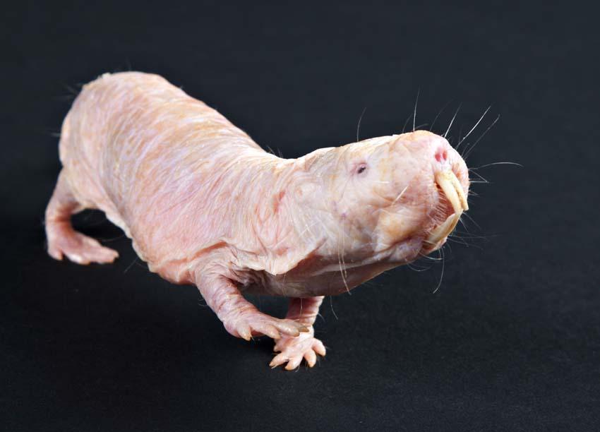 43 животных о существовании которых вы не знали