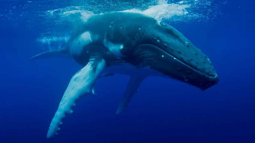 10 Самых больших китов на планете