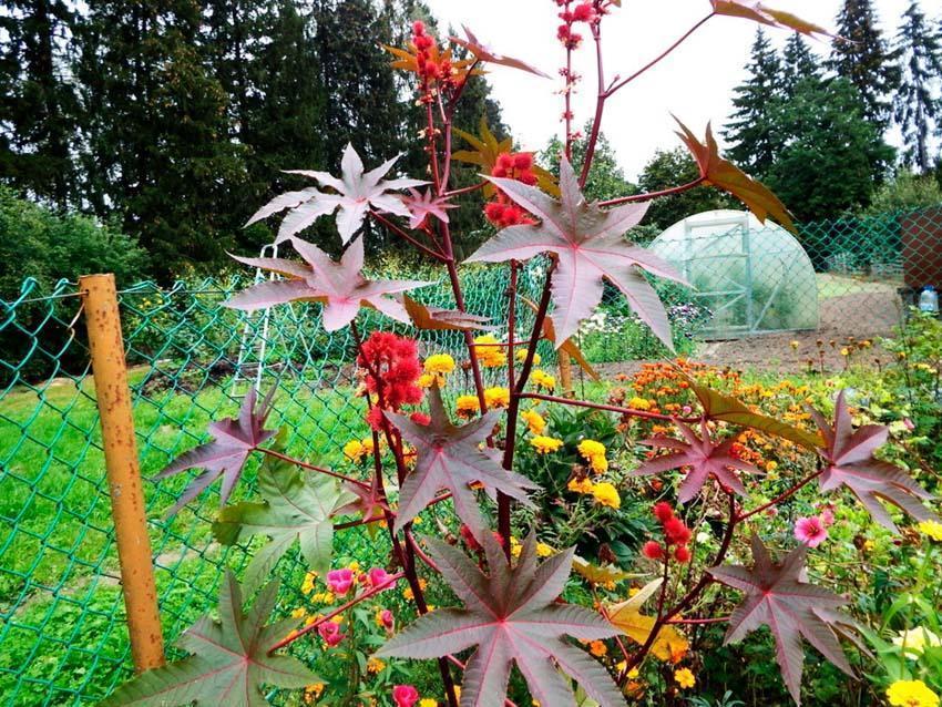 12 наиболее ядовитых растений в природе