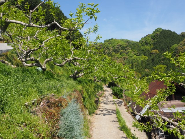 What is Agroforestry