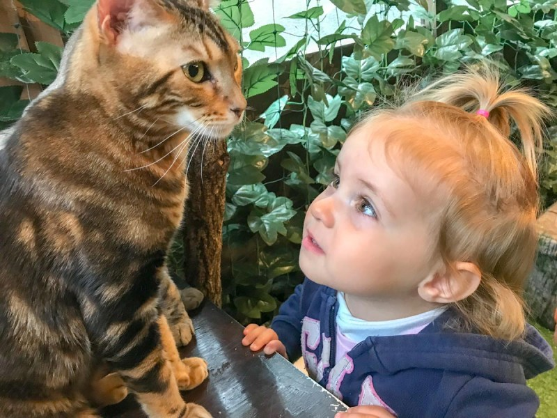 Miyajima-girl at cat cafe