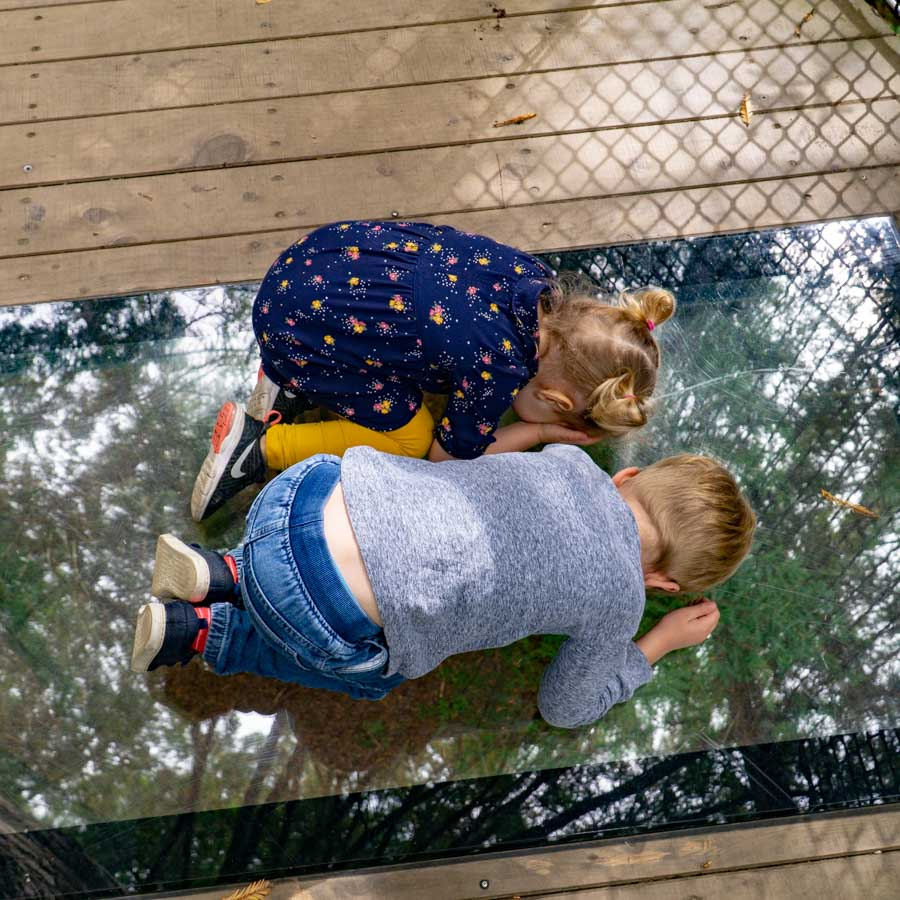 Treewalk in Rotorua kids looking through glass