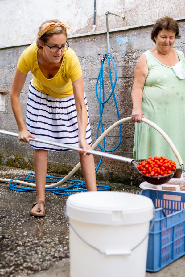 How to Make Tomato Sauce moving tomatoes from bucket to bucket
