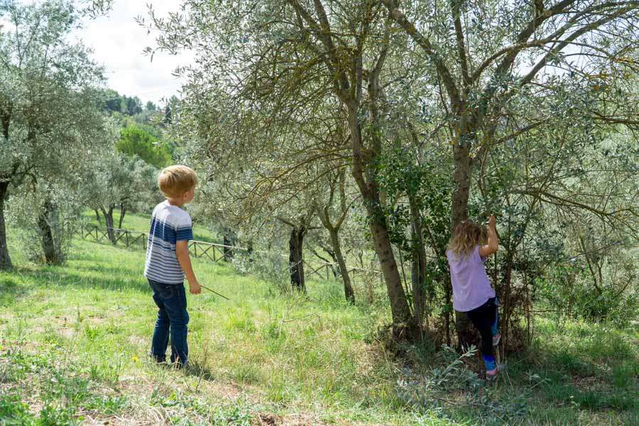 kids playing in an olive tree in Narni