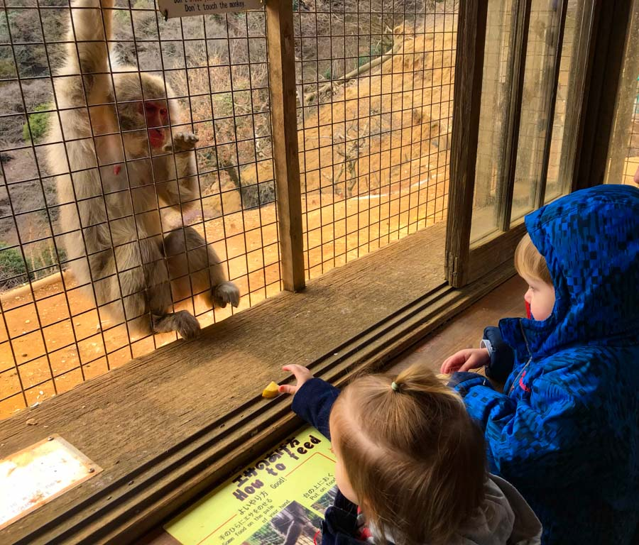 Kyoto monkey park with kdis