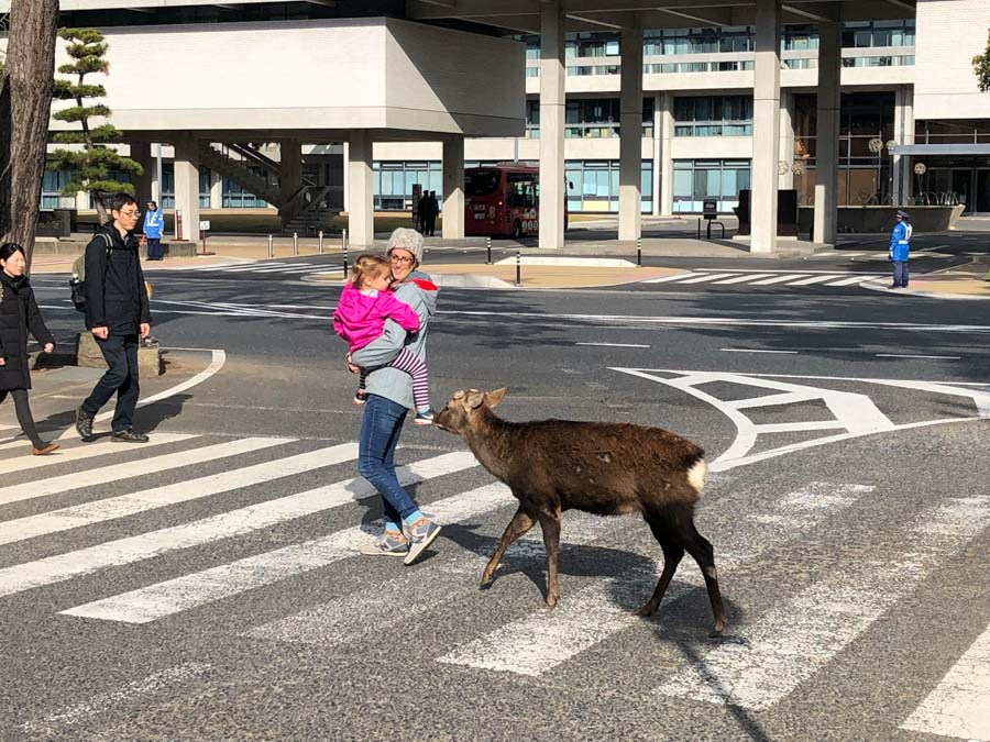 Nara deer in crosswalk