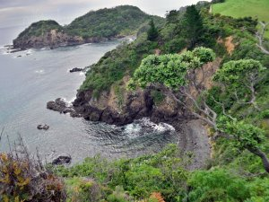 Tutukaka Coast: Bays and Pools