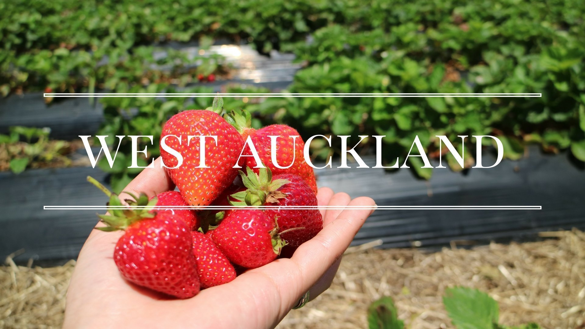 What To Do in West Auckland, New Zealand