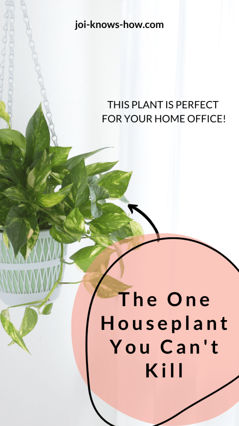 This houseplant is perfect for your home office or anywhere in your home for that matter! It's an easy care plan that can live in low light and is nearly impossible to kill. The perfect houseplant for beginners.