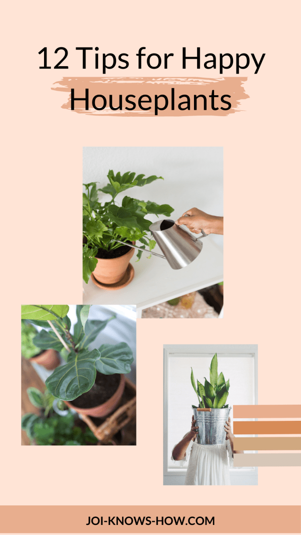 Follow these 12 tips and you'll have happy houseplants! Learn which plants to start with, what pots to use, how to water, and more!