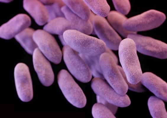 vacteria