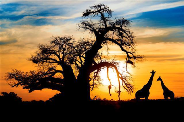 Destinos de viagem | África do Sul