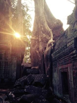 Ta Prohm - Siem Reap, Camboja
