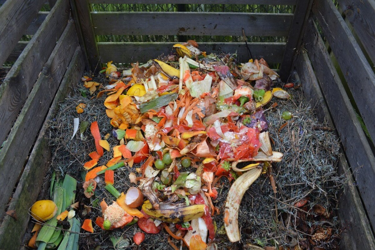 This week, although it's cold, I added more food peel to the compost which will be fine, nice and rich come spring.