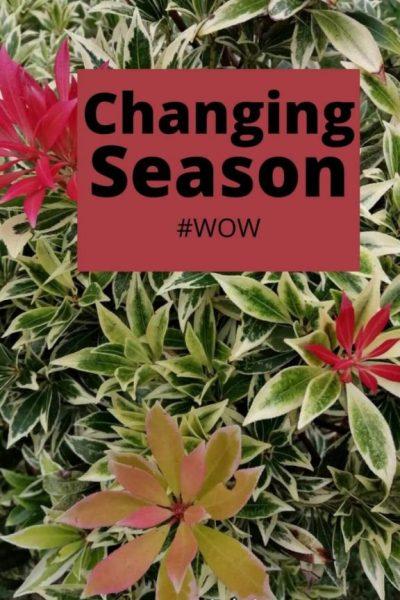 This Week: Changing Season