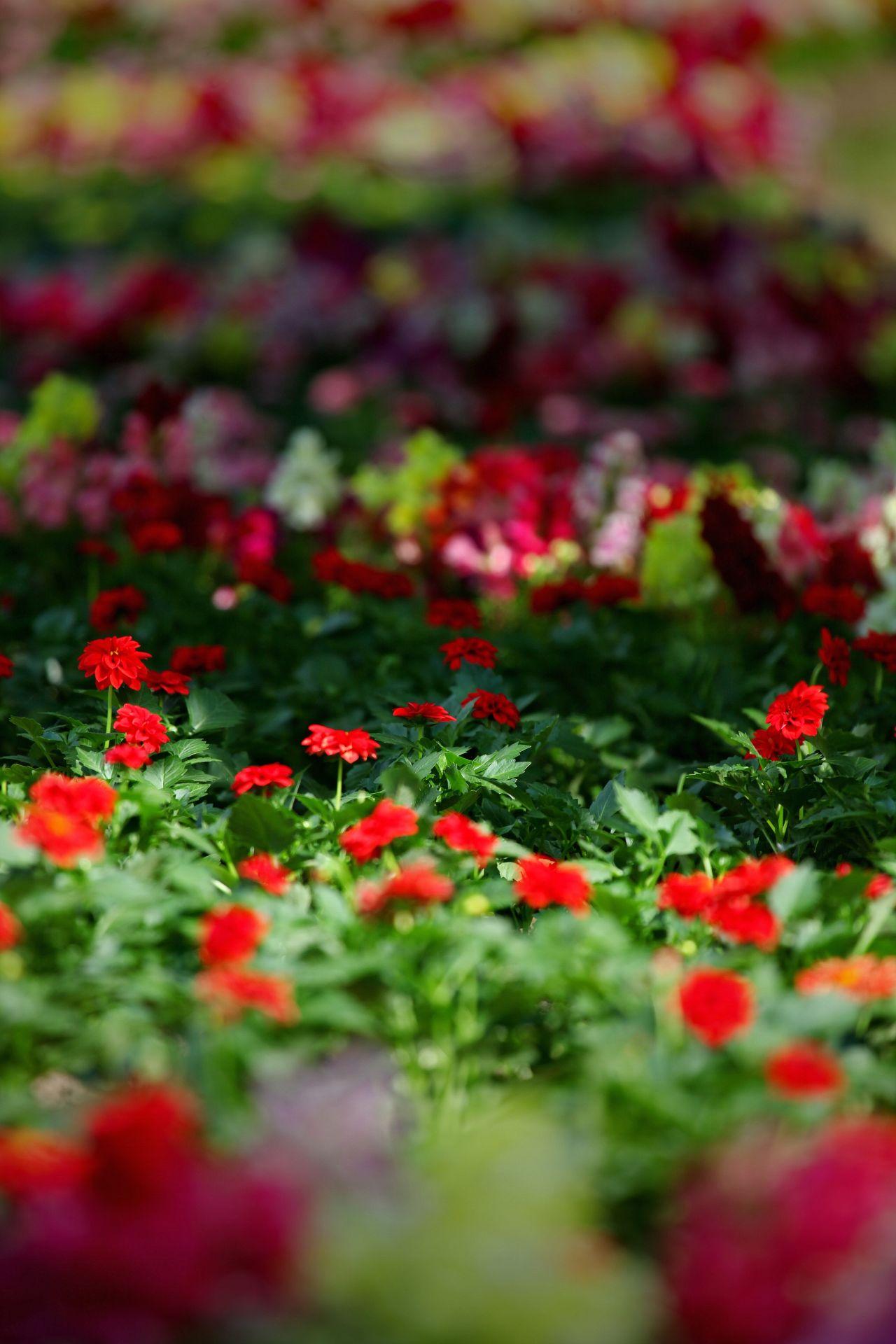 Savjeti za upoznavanje cvijeća izlazeće dame