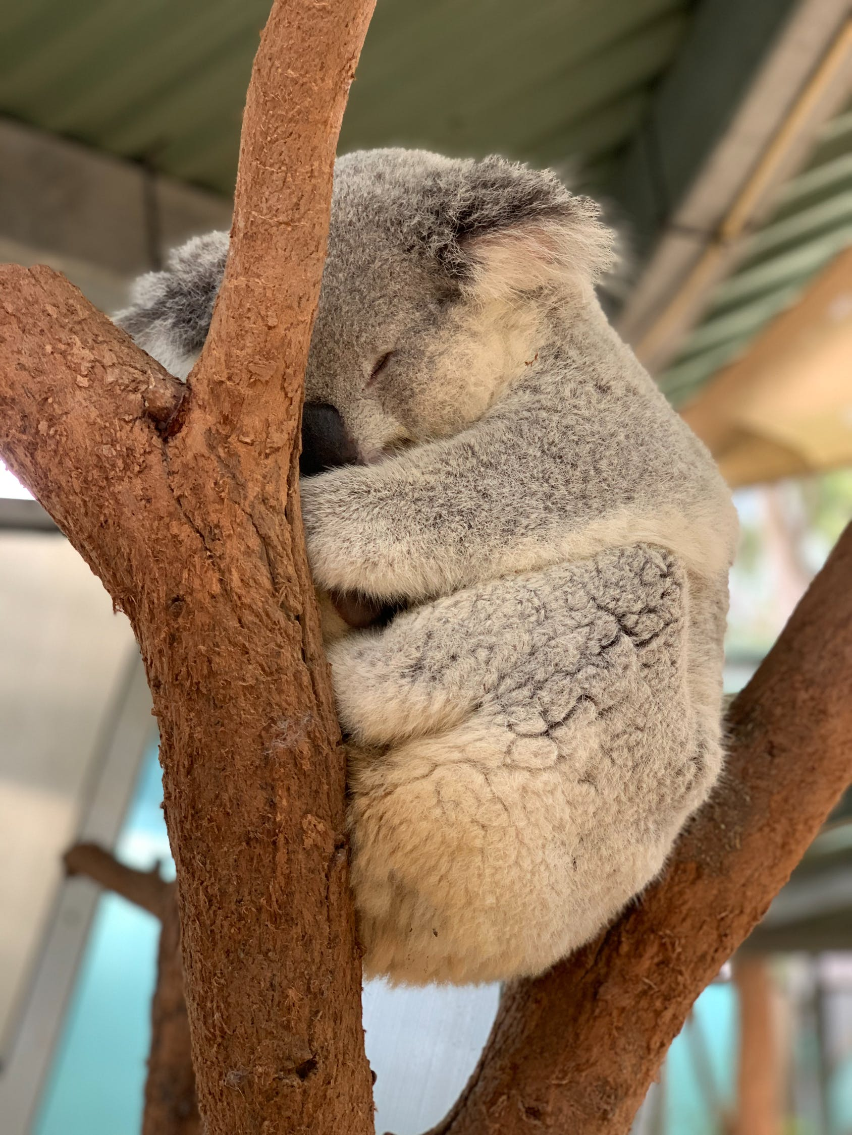 Australija # 1 web mjesto za upoznavanje