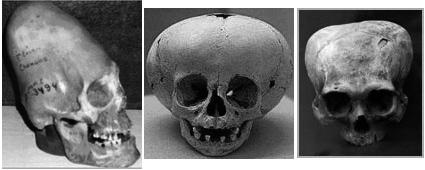 Dos Fósiles Peruanos y uno Nubio.
