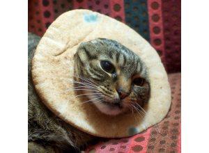 chat-pain-moisi-chancir