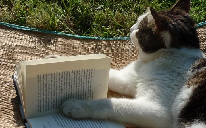 chat-lit-un-livre-mauvais-cacographe