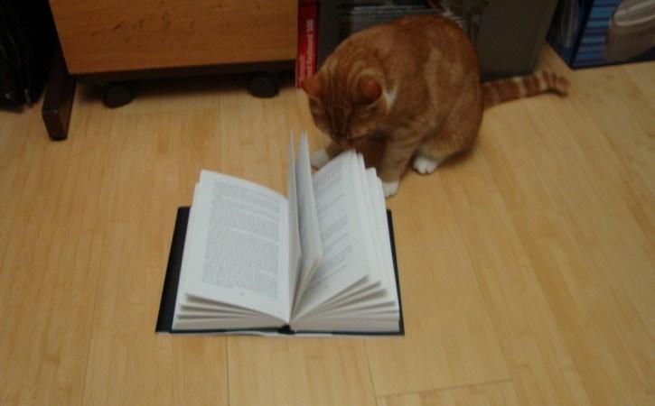 chat-roux-lit-un-livre-docte