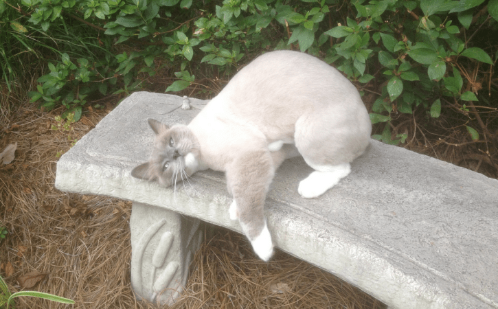 chat-trop-fatigue-velleite