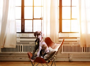 chien-chaise-altier