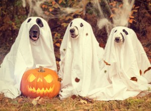 chien-deguise-fantomes-galejade