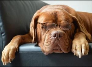 chien-dort-lunette-argutie