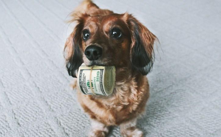 chien-liasse-billets-munificence