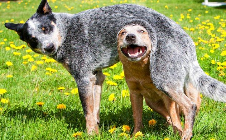chien-pardonne-un-autre-irenisme