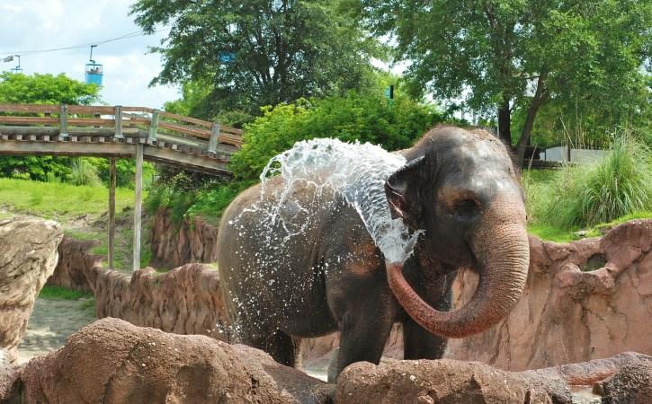 elephants-se-gicle-prophylactique