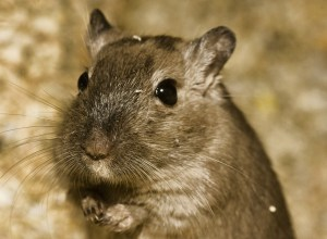 hamster-demander-quemander
