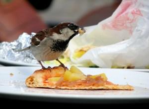 oiseau-vole-pizza-spoiler
