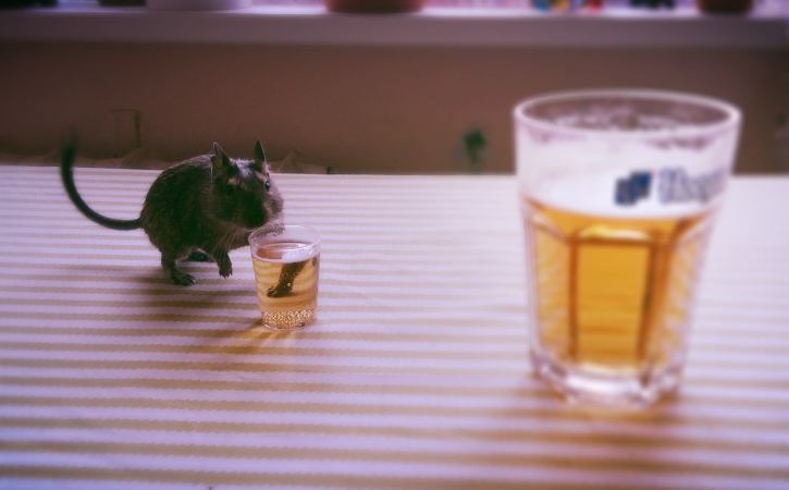souris-boit-biere-mastroquet