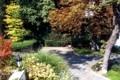 Fák, bokrok a kertben