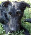 Frenki kutya