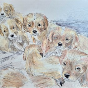 Amdall-Boo-Crew-puppies