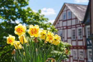 Marburg-Mai2019-DSC_3593
