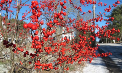 I found this colorful burst along Bay Road in Duxbury, Mass., on Wednesday, Jan. 13, 2016.