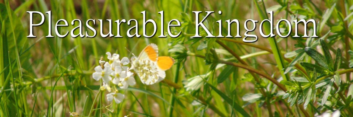 Pleasurable Kingdom Temporary Featured Image