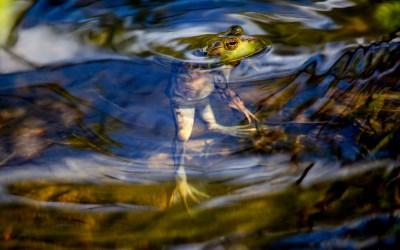 grenouille -retoucher signer