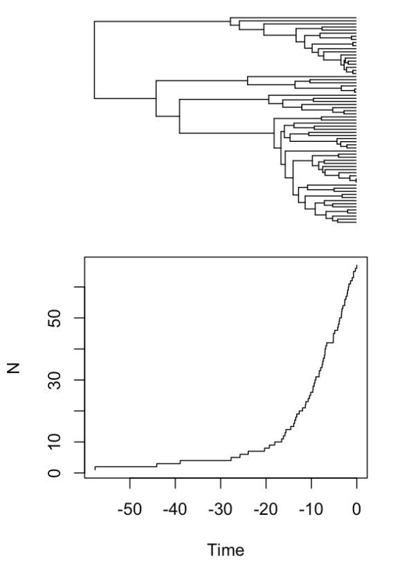 A phylogeny of Acanthuridae with a lineage-through-time plot.