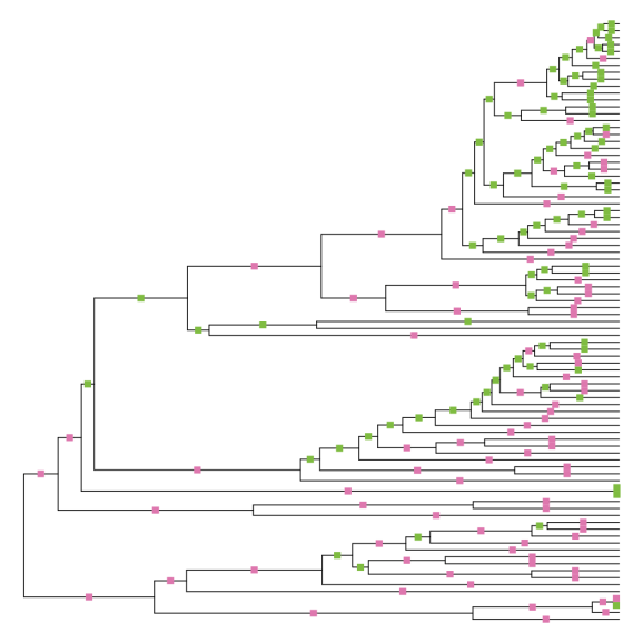 """Phylogeny of whales, forced to be ultrametric via the """"non-negative least squares"""" method. 171 branches have changed length, with about half becoming longer and half becoming shorter, in different parts of the tree."""